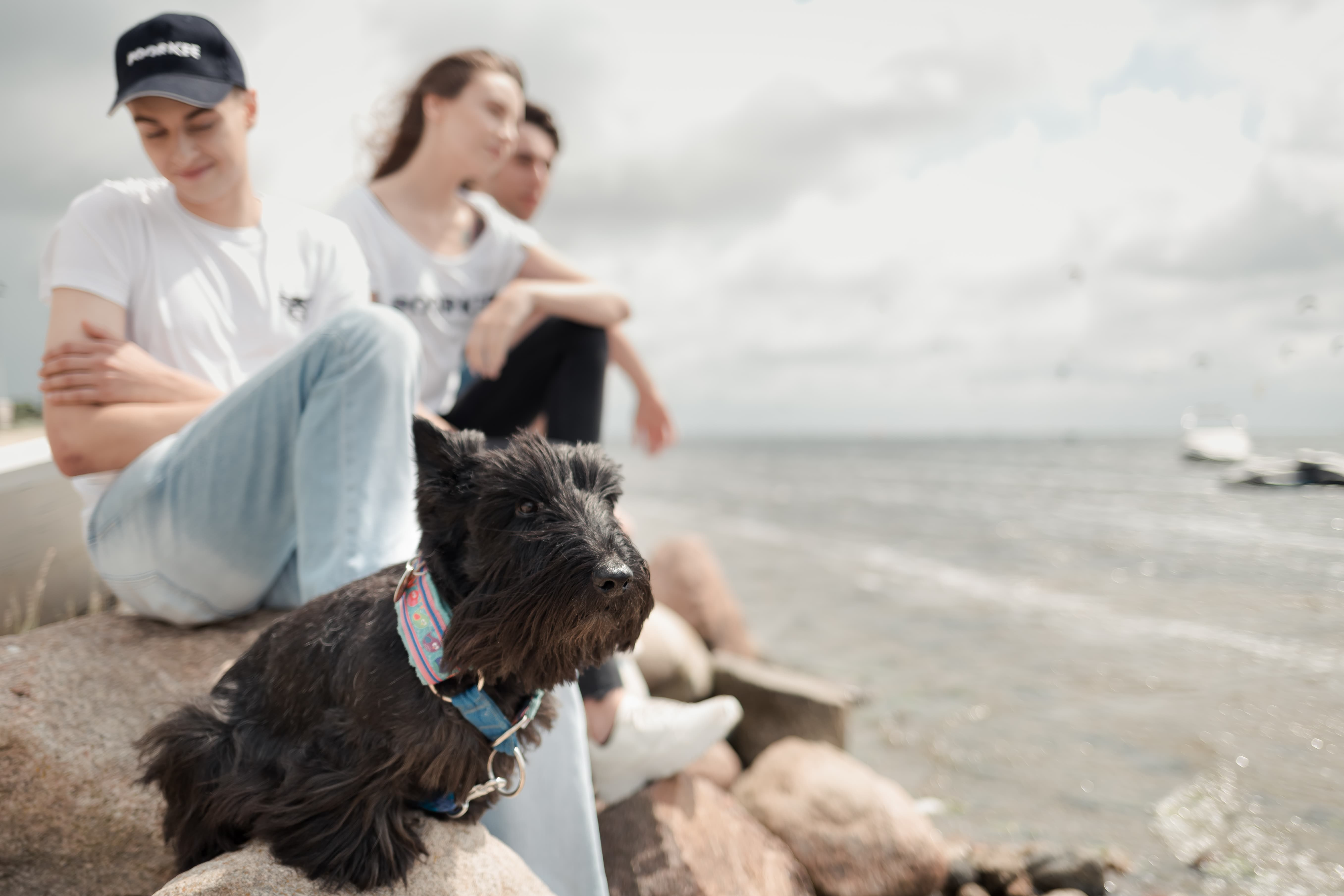 three young people and a dog are sitting on the beach, you can see the sea, the sky and a piece of the ship